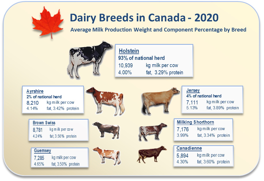Average milk production volume and component percentage by breed.